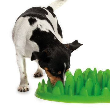 Slow Food For Canines Bumps In The Bowl So They Can T