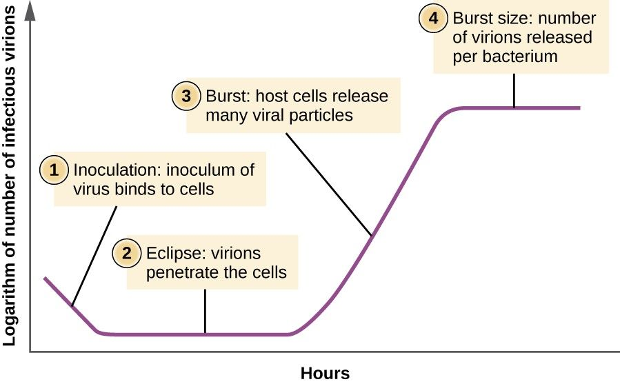 Image result for eclipse period virus  Microbiology