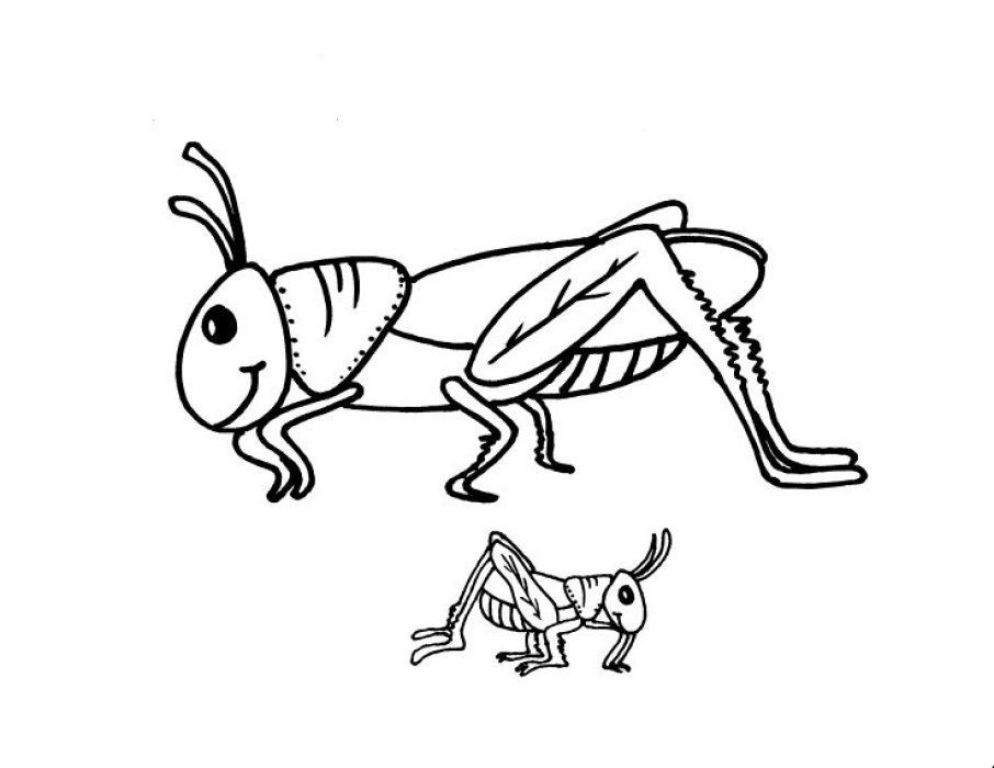 Ant And Grasshopper Coloring Pages V 2020 G