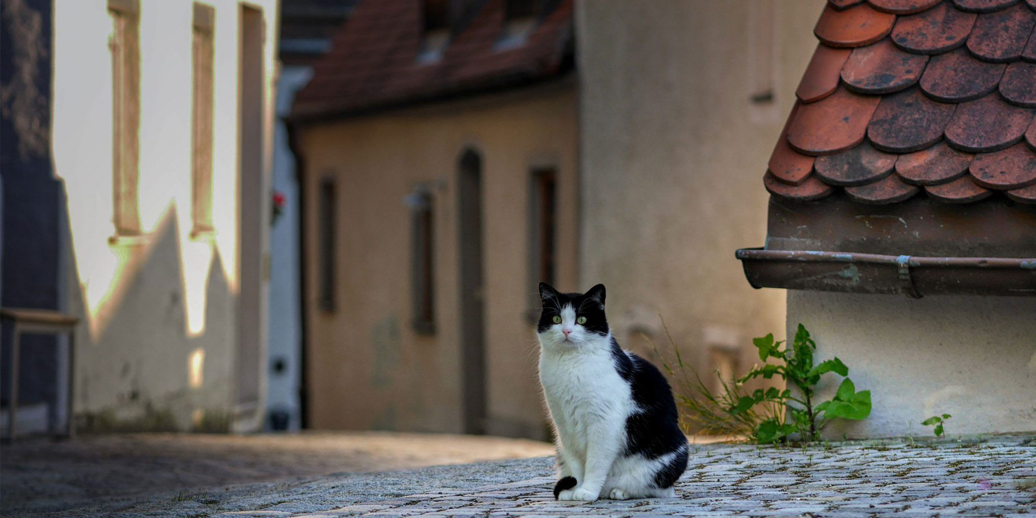 Keeping Cats Safe How to Update Microchip Details