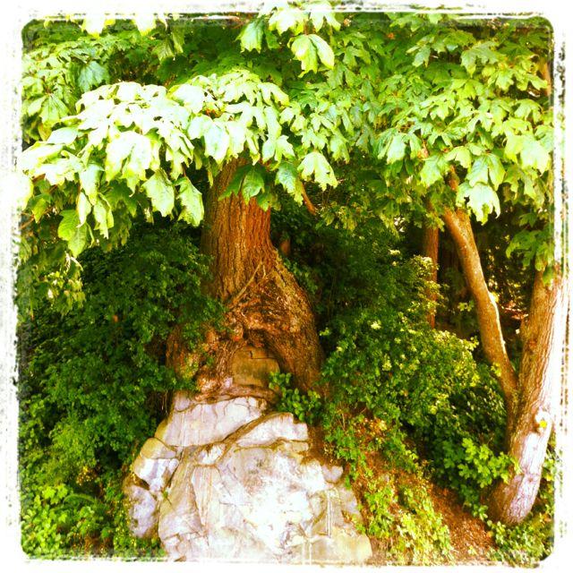 Hobbits tree   Photo by: Yasaman Mohandesi