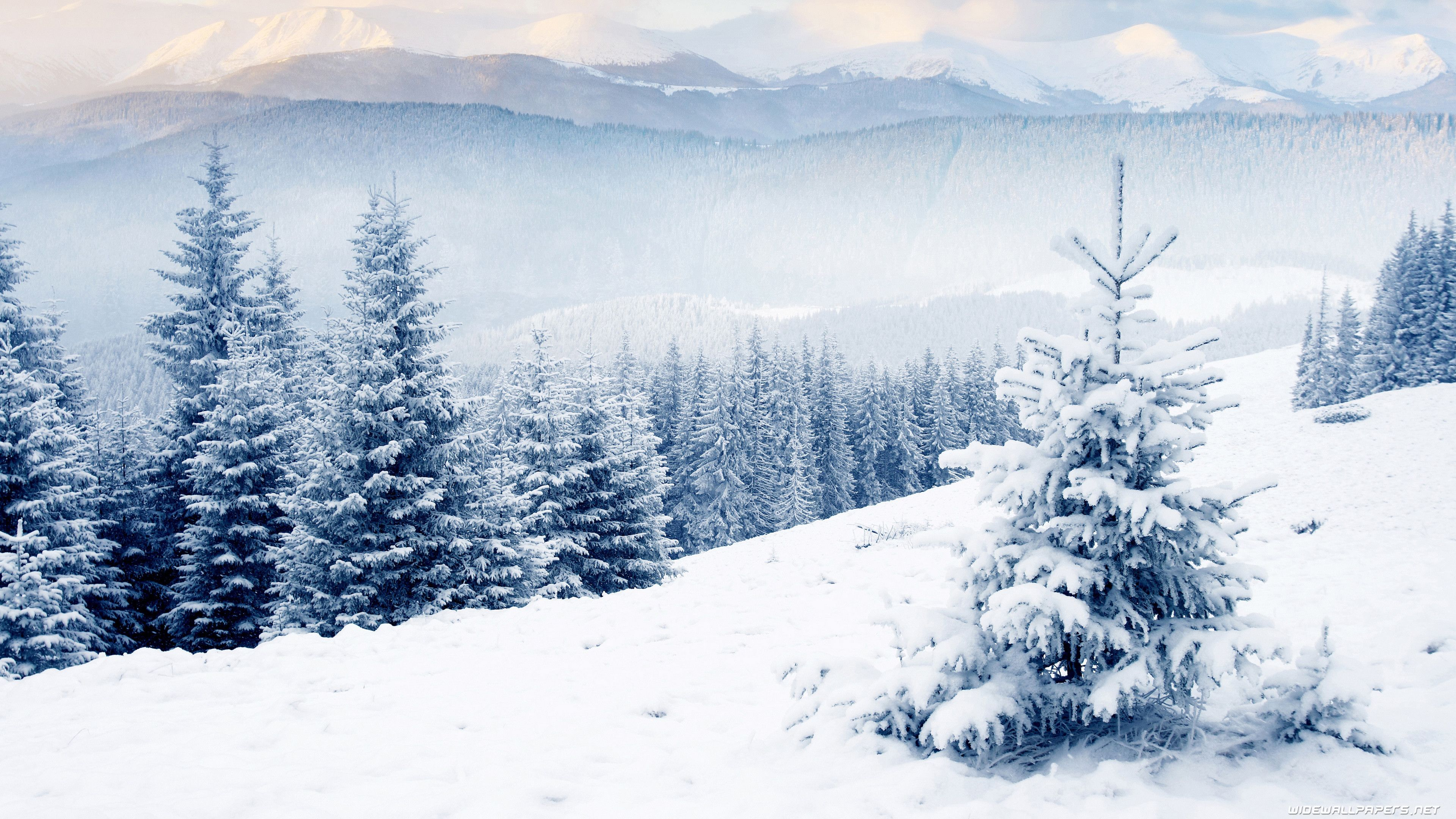 Res 3840x2160 Winter Scenery Winter Wallpaper Hd Winter Desktop Background
