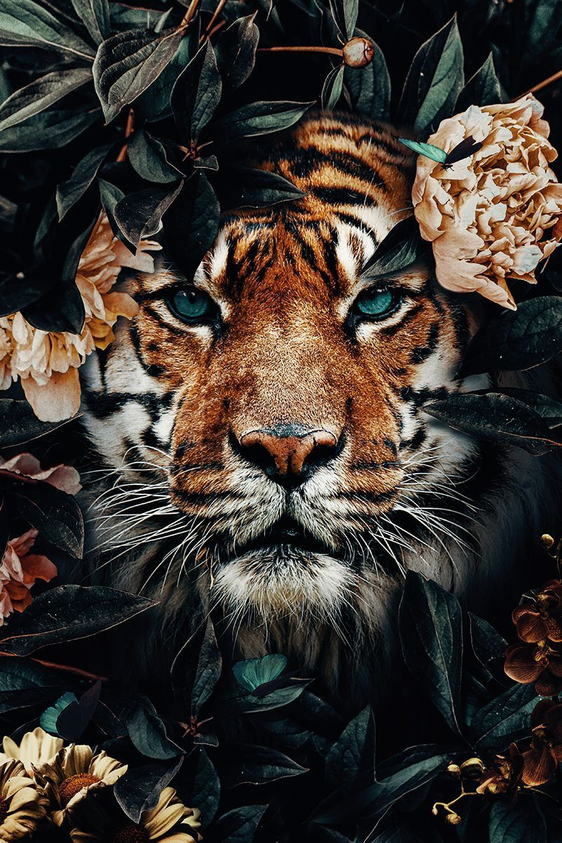 Order Tiger Jungle Poster En 2020 Photos Animaux Sauvages Photo Animaux Image Animaux