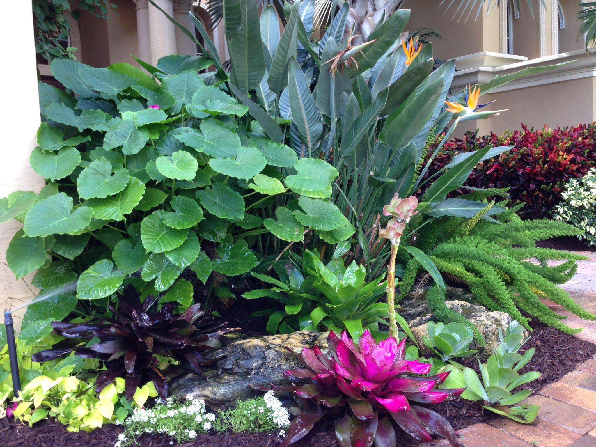 Tropical Plant Design Tropical Landscaping Tropical Garden