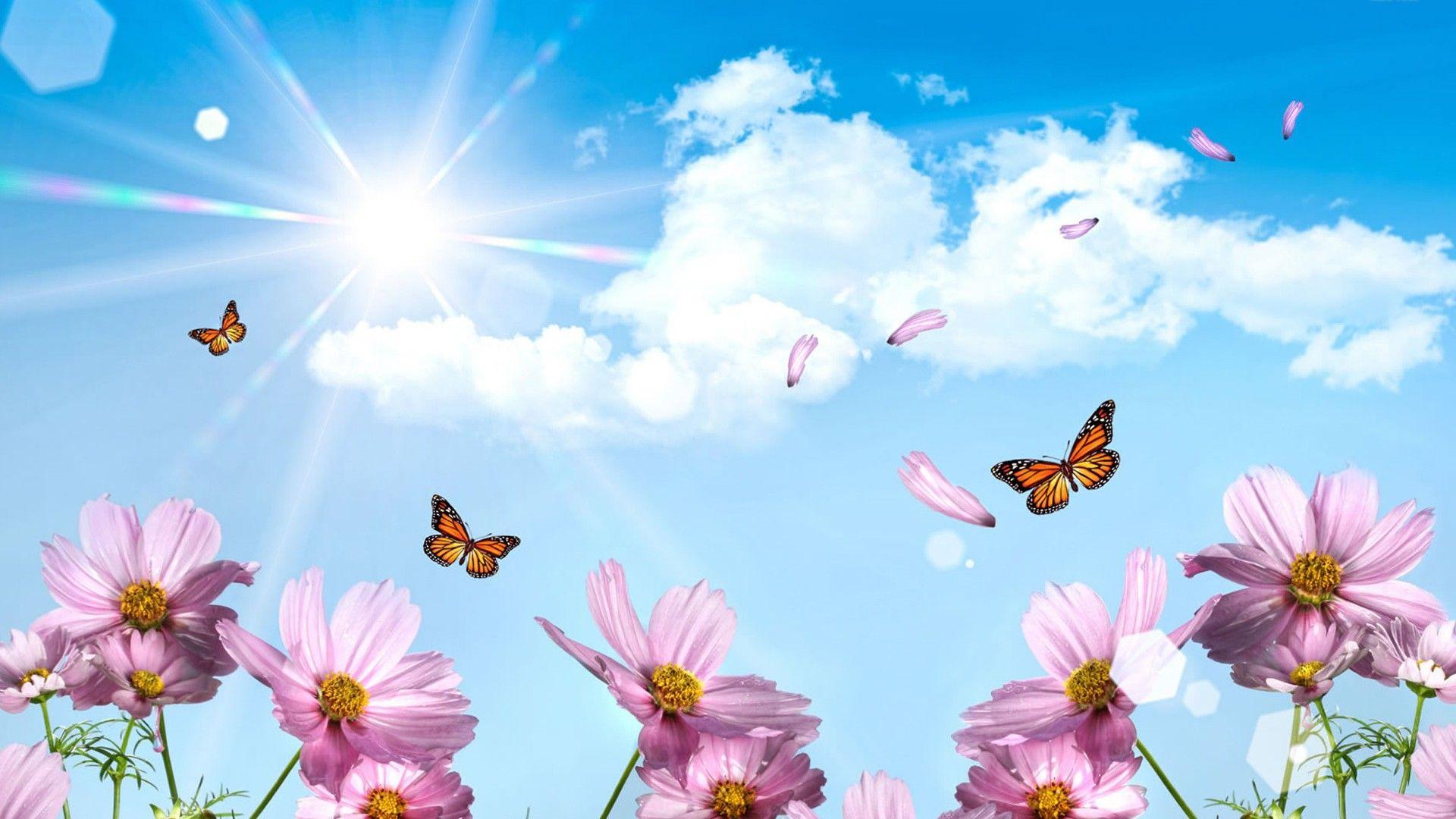 Wallpaper Hd Hello Spring 2021 Live Wallpaper Hd Spring Wallpaper Butterfly Wallpaper Desktop Wallpapers Backgrounds