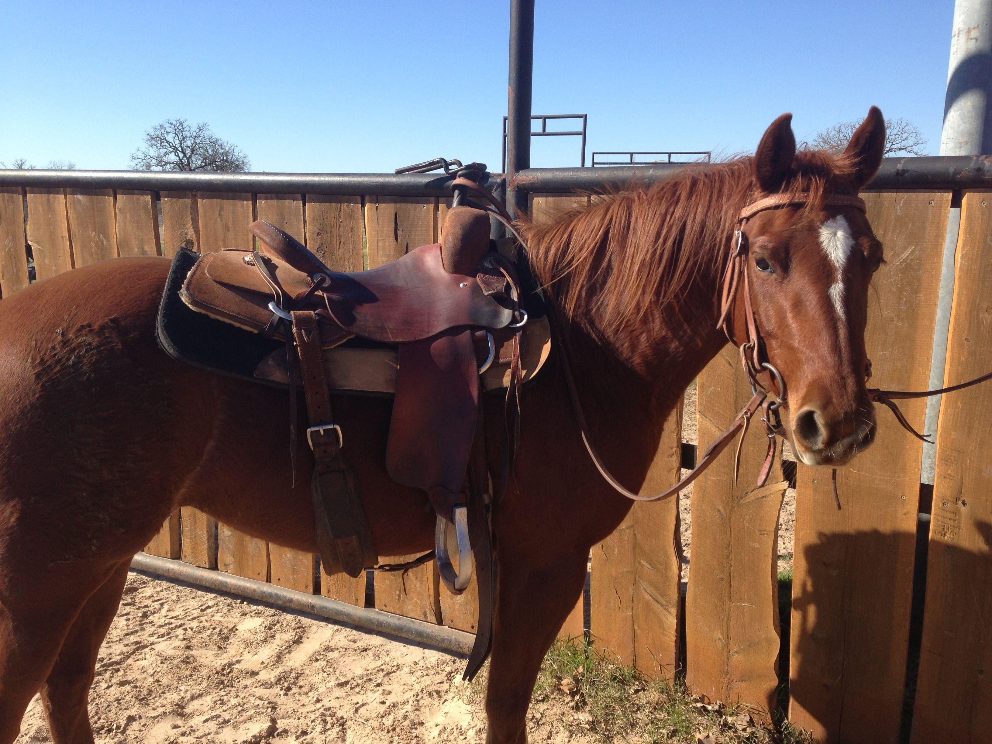 LOLA- 2009 AQHA mare, NCHA cutting horse