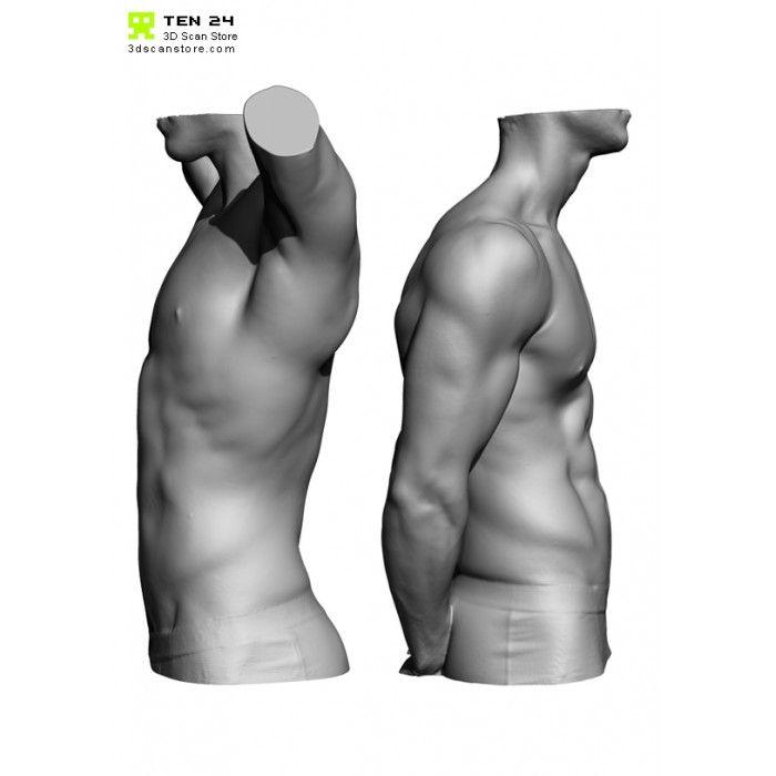 Male Anatomy Bundle 01 | Anatomy, Male torso and Human anatomy