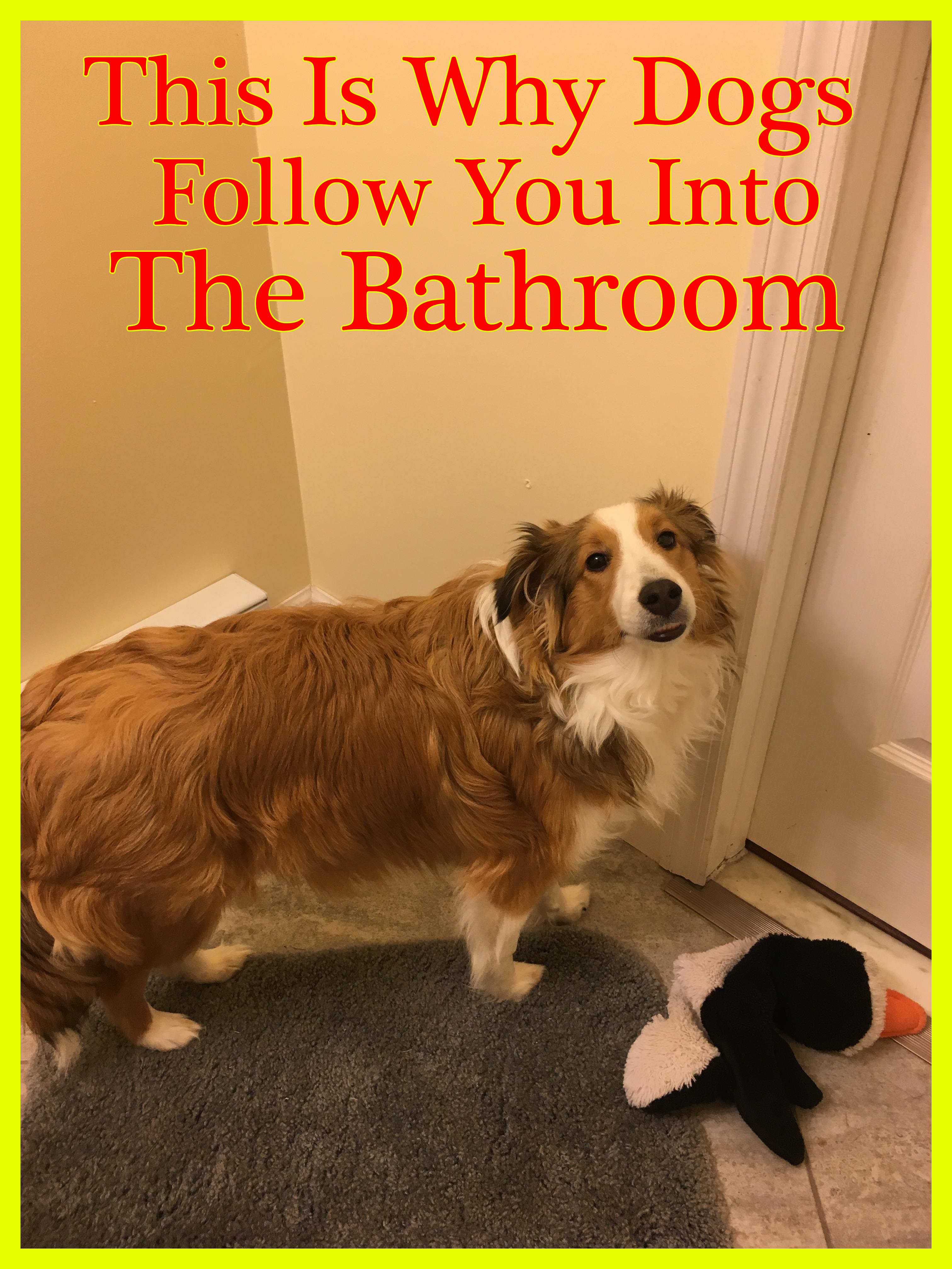 This Is Why Dogs Follow You Into The Bathroom I Never Knew This In 2020 Dogs Dog Lovers Girls In Love