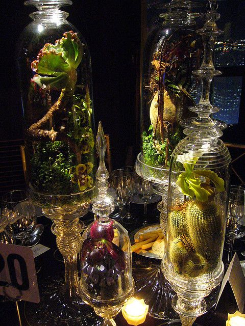 Orchid Terrariums by jennysherbie, via Flickr