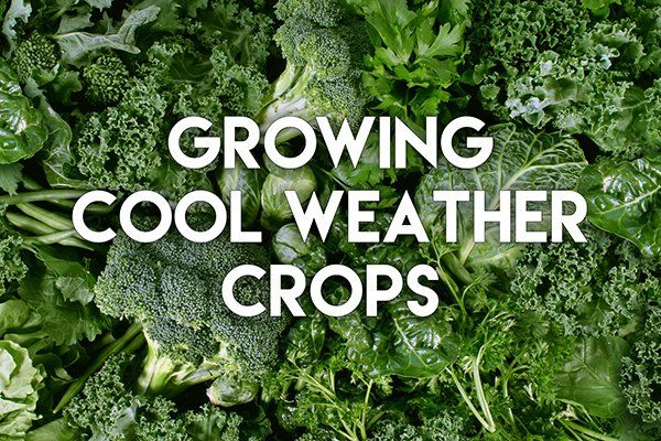 Growing Cool Weather Crops Earthbox Gardening Tips Gardening Tips Weather Amazing Gardens