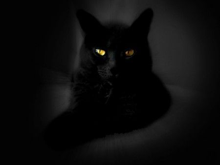 Diamond Eyes Desktop Nexus Wallpapers Black Cat Cute Black Wallpaper Cat Wallpaper