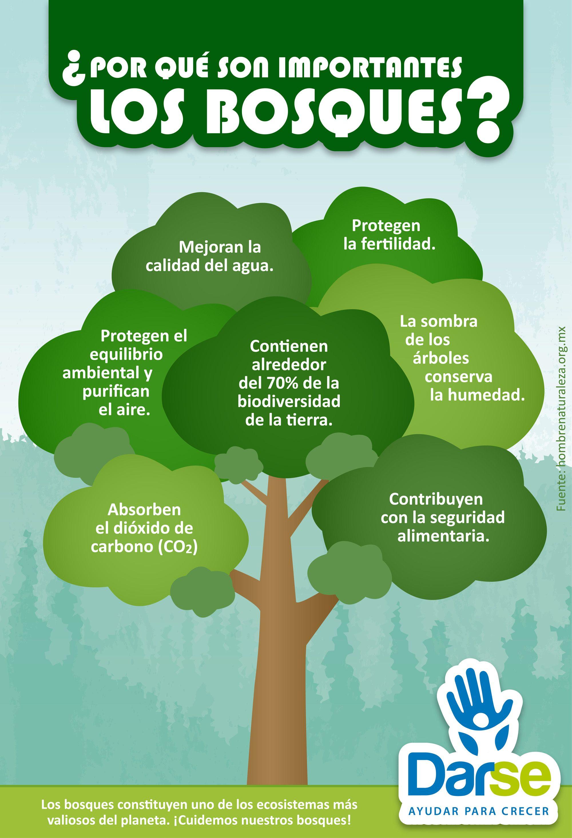 Darseinfograf a por qu son importantes los bosques for Porque son importantes los arboles wikipedia