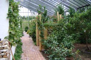 http://www.barkholt-planteskole.dk/