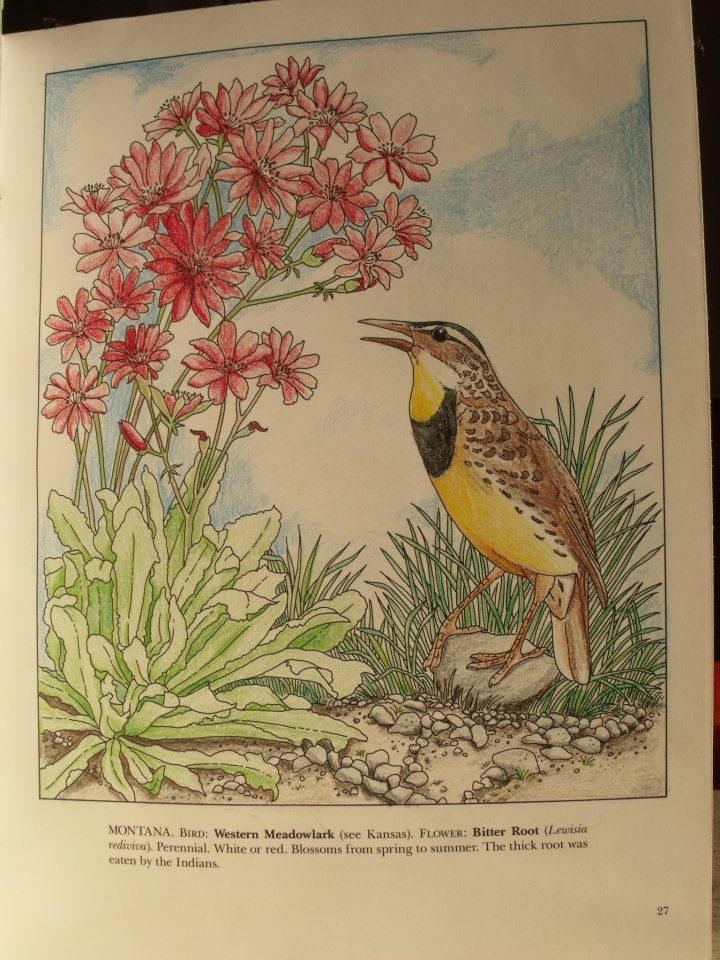 Yolanda Nava 18 Division From State Birds And Flowers Coloring Book
