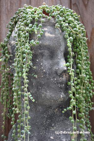 Face Pots Plants Succulents Succulents Garden