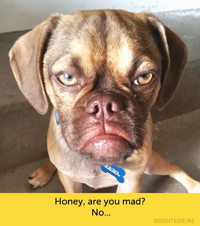 15 Dogs Whose Facial Expressions Are Downright Hilarious Grumpy