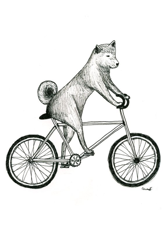 Shiba Inu Dog Riding A Bicycle Print