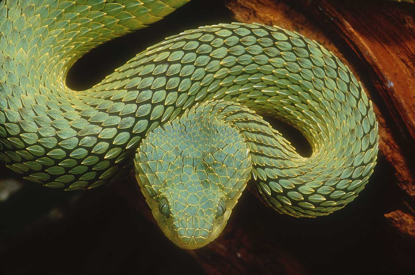 Variable Venom — Why Are Some Snakes Deadlier Than Others?