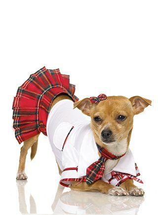 Little Cheerleader Pet Costumes Pet Costumes For Dogs Pet Halloween Costumes