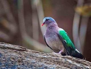 شاهد اصوات يمام زمردي تغريد الطيور List Of Birds Most Beautiful Birds Beautiful Birds