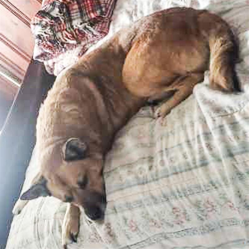 Lost Dog Male Arlington Park Columbus Oh Usa 43211 Losing A Dog Losing A Pet Arlington Park