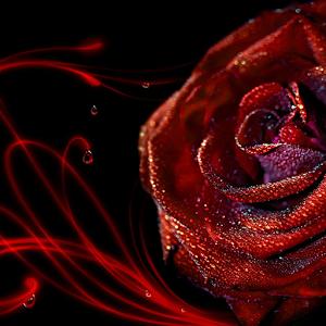 Blue Rose Live Wallpaper 1 1 1 Apk Com Smaks Cheackapp Apk Red Rose Pictures Rose Flower Wallpaper