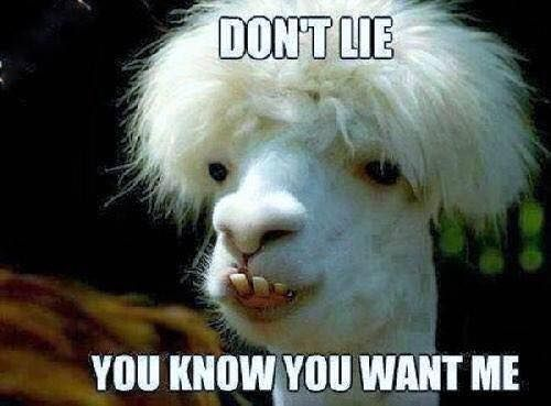 I Can T Thank My Beautiful Followers Enough U Make Me Smile From The Minute I Get Up Give Me A Like If I Do Funny Goat Pictures Goats Funny Funny