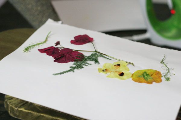 How to press flowers bouquet preservation pinterest flower pressed flower tutorial mightylinksfo