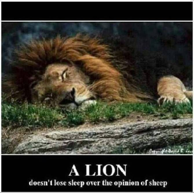Leos Stand Up With Images Lions Dont Lose Sleep Lion Feline
