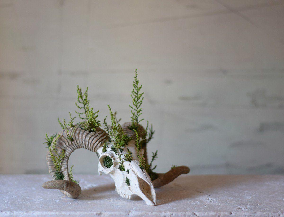 Photo of plants born (sheep) forest | iichi ハンドメイド・クラフト作品・手仕事品の通販