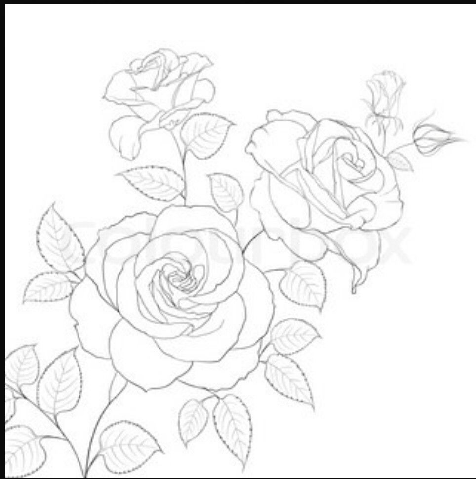 Simple Rose Outline Drawing Rose Sketch Realistic Flower Drawing