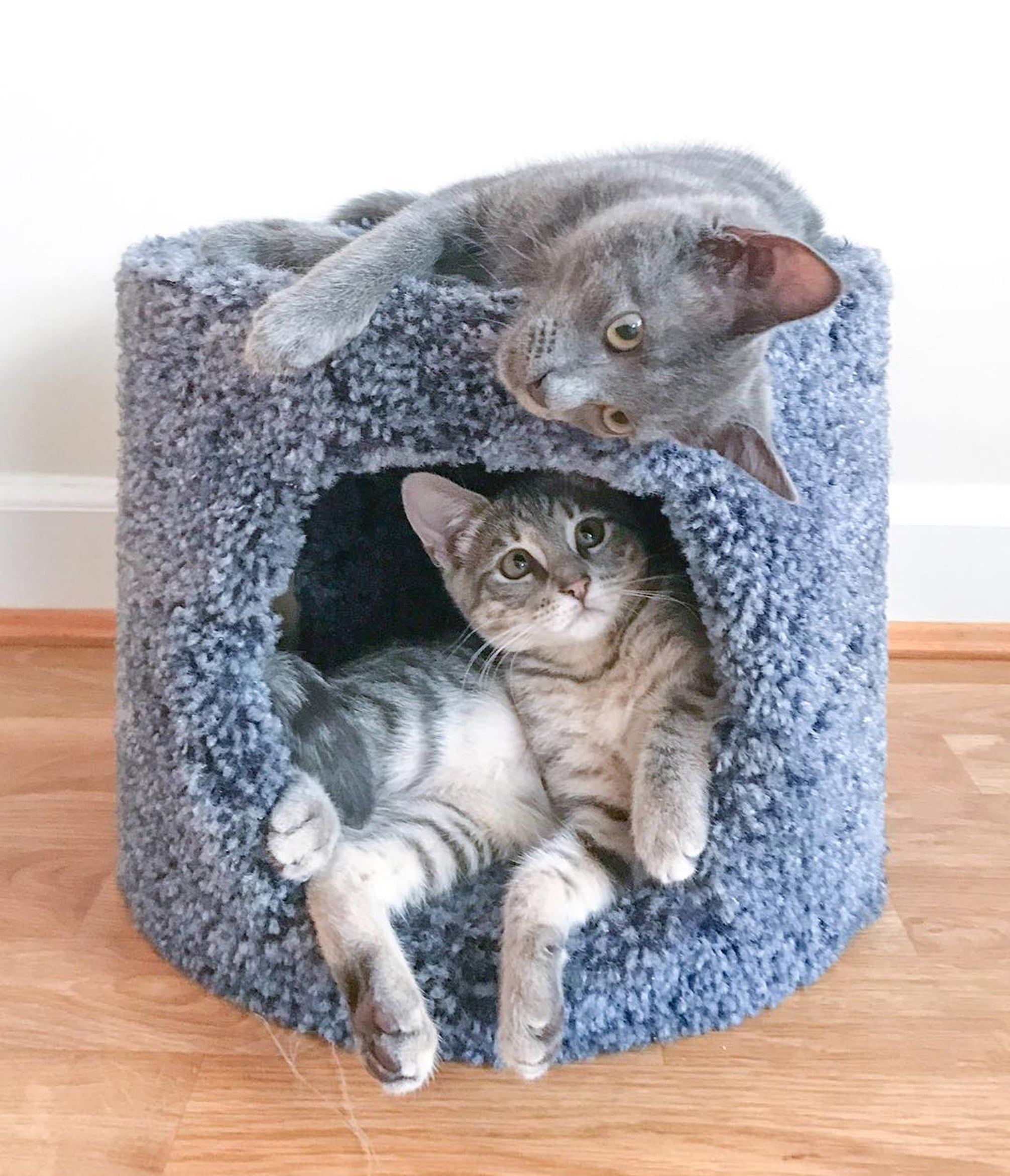 Adopting 2 Cats At The Same Time Is The Best Pet Owner Decision I Ve Ever Made In 2020 Pet Owners Crazy Cats Cat Facts