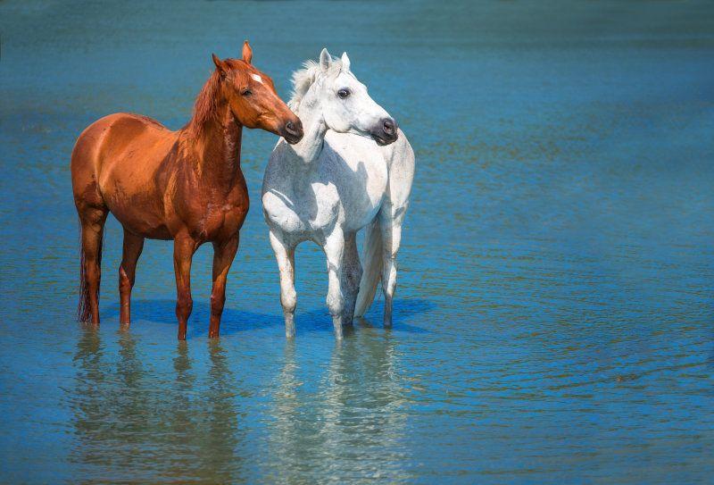 Лошади в моей жизни - альбомы - *Ashva* Виктория Бондаренко - конники - equestrian.ru