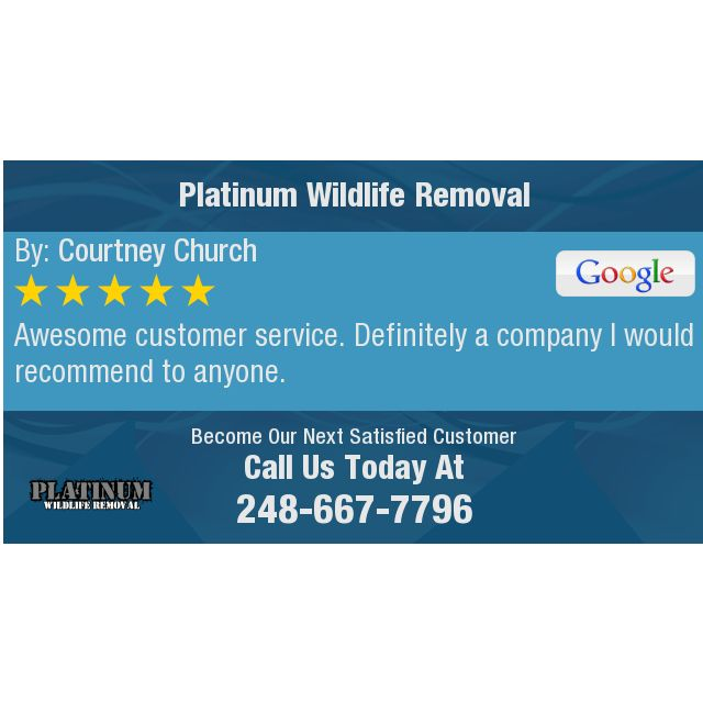 Awesome Customer Service Definitely A Company I Would Recommend To Anyone With Images Pest Solutions Solutions How To Remove