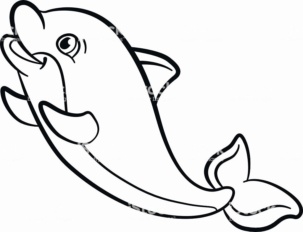 Coloring Pages Animals Unique Coloring Pages Marine Wild Animals Little Cute Baby Dolphin Dolphin Coloring Pages Animal Coloring Pages Baby Dolphins