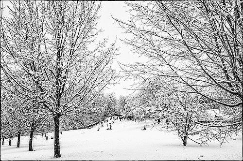 Snow Study #0003