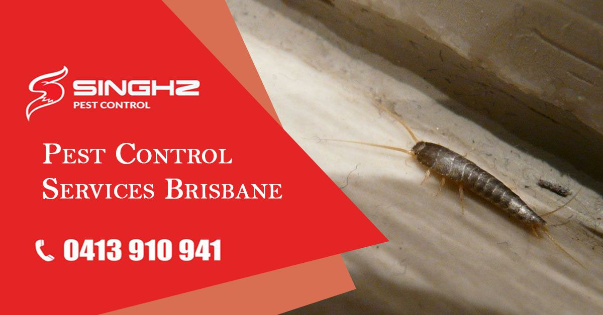 Silverfish Are Typically Found Inside The Home And Commercial Buildings Where They Can Cause Damage To Artificial Silk Line Pest Control Pests Flea Prevention