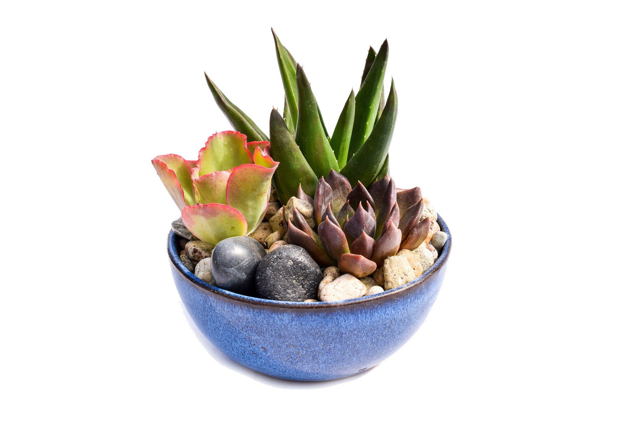 Succulents That Go Together Well In A Large Dish Container Google Search In 2020 Dish Garden Succulents Succulents For Sale