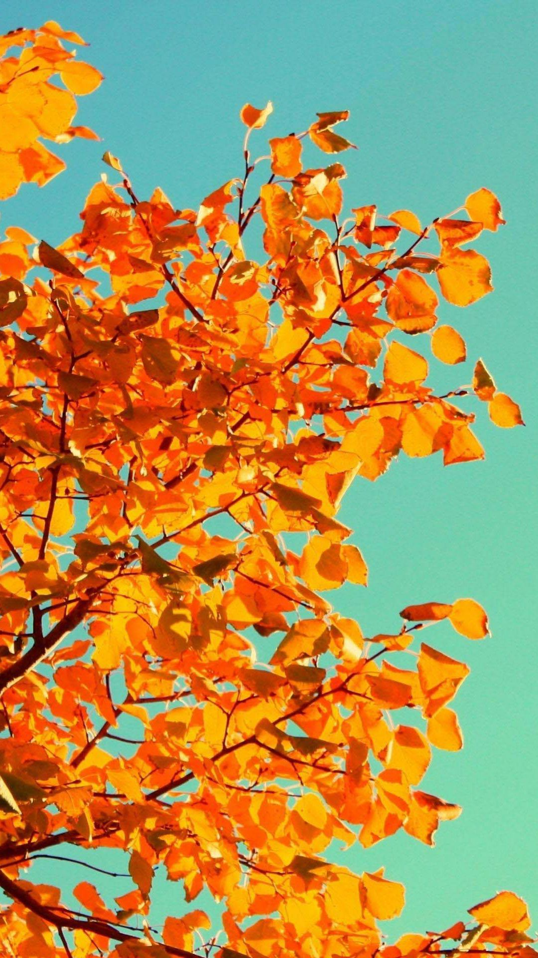 Fall Tree Art iPhone 5s Wallpaper Download iPhone