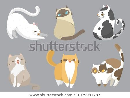 set of different cats breeds in different poses with on