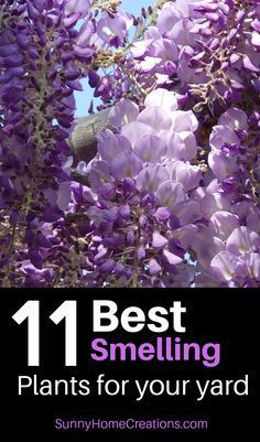 11 Best Smelling Plants for Your Yard - Most Fragrant Plants #smallfrontyardlandscapingideas