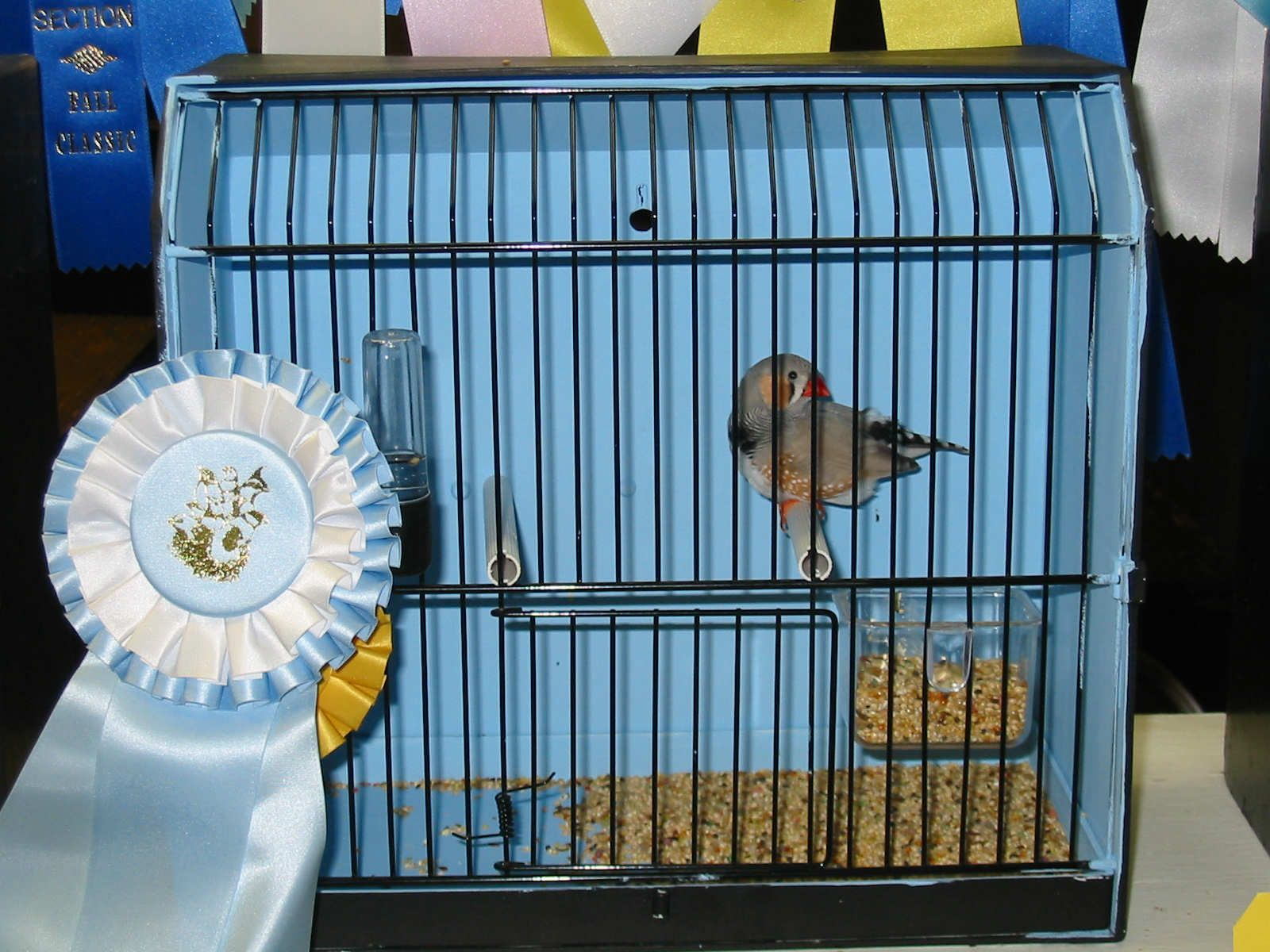finch cages for sale | Bird cages | Pinterest | Finch cage