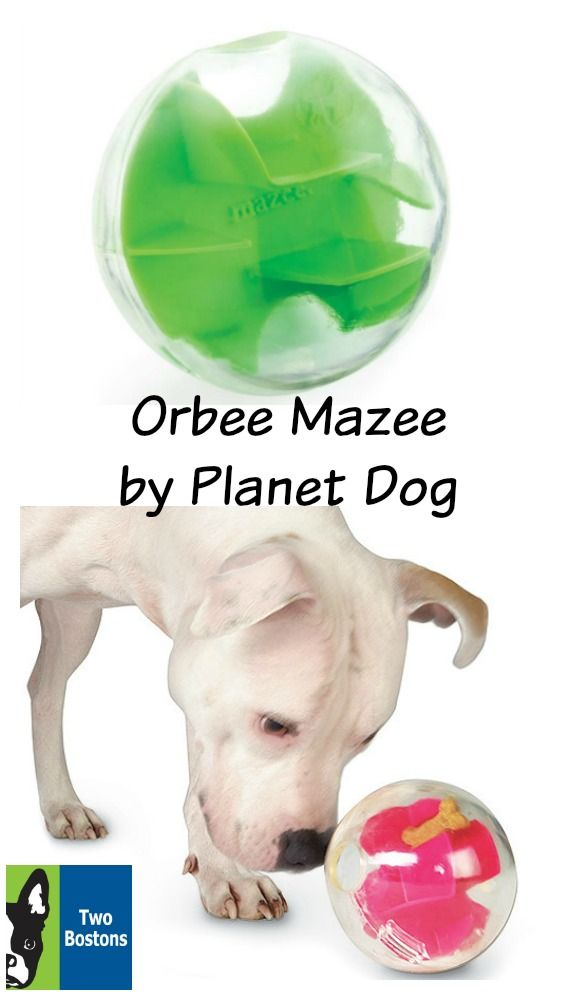 Orbee Mazee By Planet Dog Dog Toys Dog Love Little Einsteins
