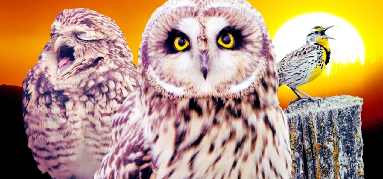 What Successful Night Owls Get Done Before Bed Owl Night Owl Night