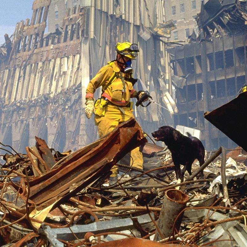 Saluting our Hero Dogs who helped on 9-11-01.  Amazing animals! ~MJM 2013