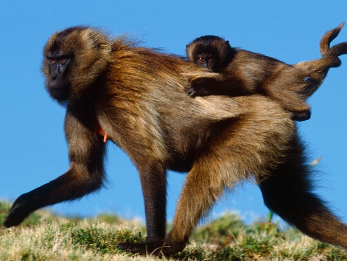 Animal Mothers And Babies Photos