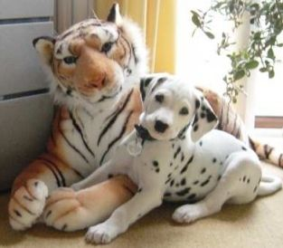 dalmatians in the fall   Stop Biting Puppies Bad Behavior - Learn To Control Them   BitingPuppy ...