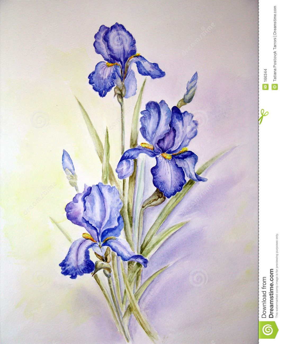 Illustration About My Watercolor Painting Illustration Of Watercolour Painting Flora 166344 Iris Painting Watercolor Flowers Paintings Iris Drawing