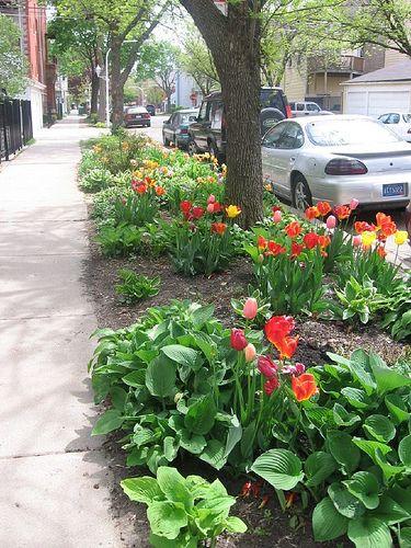 Plan a Perfect Sidewalk Garden   Pinterest   Sidewalk, Garden ideas ...