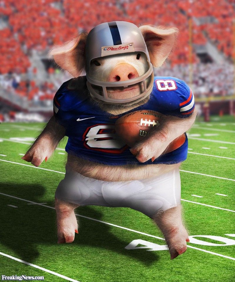 Pig Playing Football Funny pig pictures